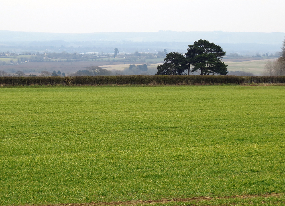 Many fields are now full of spring crops