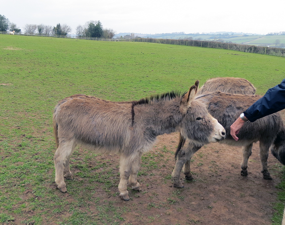 Friendly donkeys