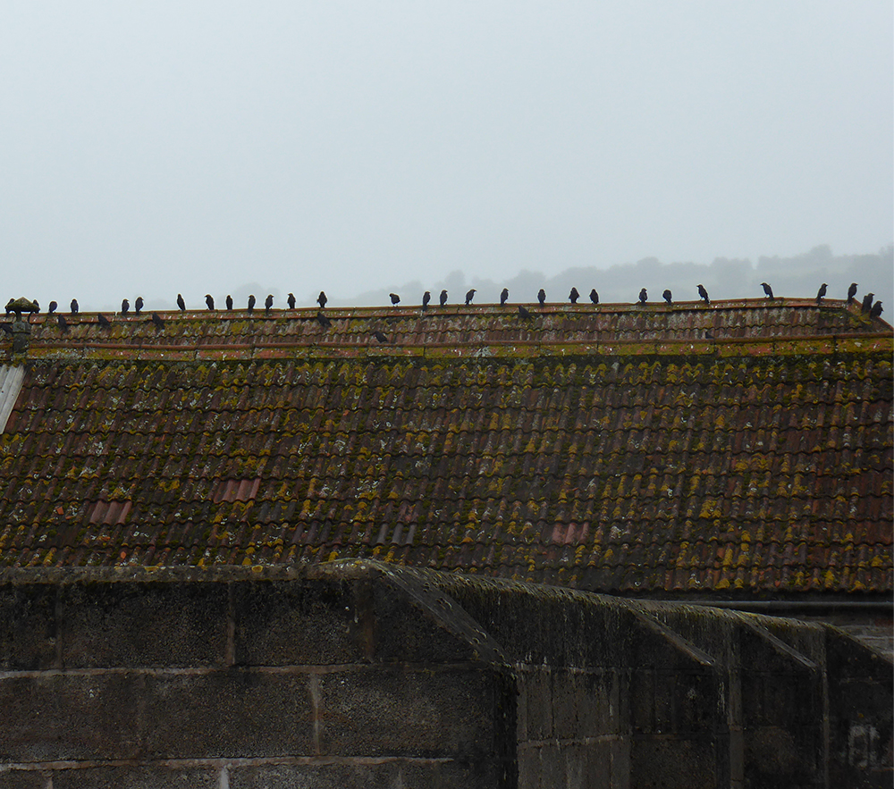 Birds on a barn roof at Model Farm